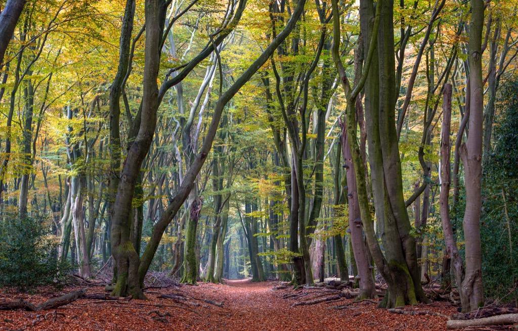 5 tips om tot rust te komen op de veluwe hoi veluwe for Vakantiehuisje bos